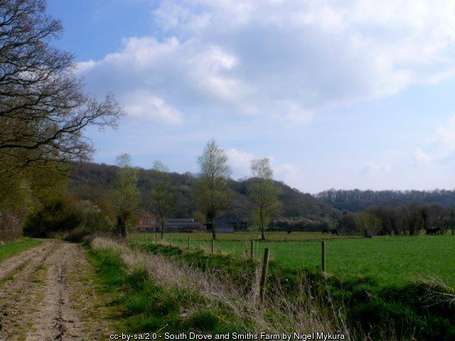 South Drove towards Smith's Farm