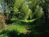 Stillbrook Lane, Fivehead