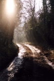 Woodland Walk, Fivehead