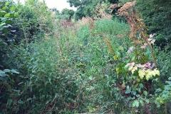 A wee bit overgrown