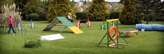Agility Training Course